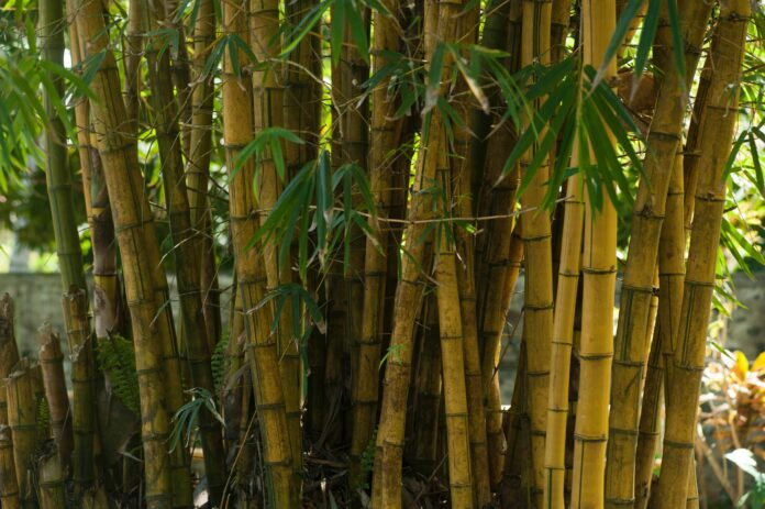 bambus, ekologia, zero waste